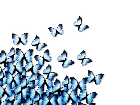 monarch: elegant abstract background with blue butterflies Stock Photo