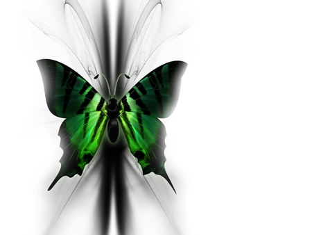 abstract butterfly: elegant green beautiful butterfly on abstract background