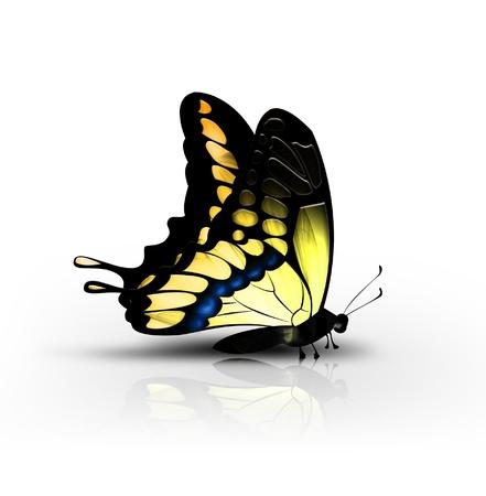 petites fleurs: beau papillon jaune sur un fond blanc - vue latérale