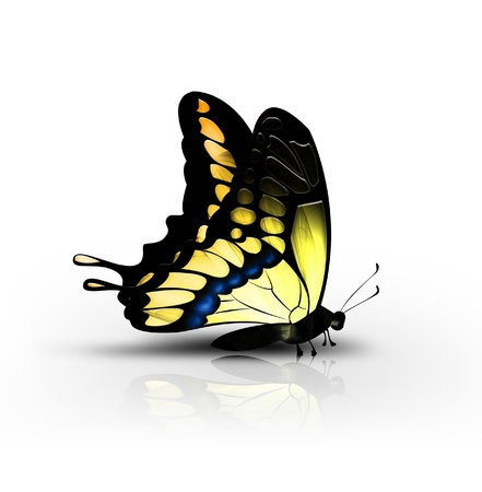 beautiful yellow butterfly on a white background - side view photo