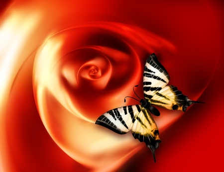 beautiful butterfly sitting on an abstract glowing rose photo