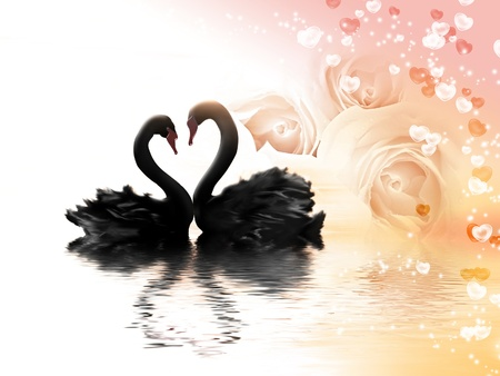 romantic card with flowers, hearts and a pair of black swans photo