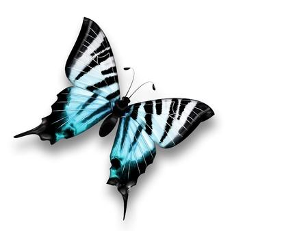 petites fleurs: beau papillon bleu sur un fond blanc