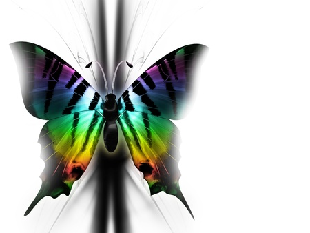 monarch: elegant multicolored beautiful butterfly on abstract background