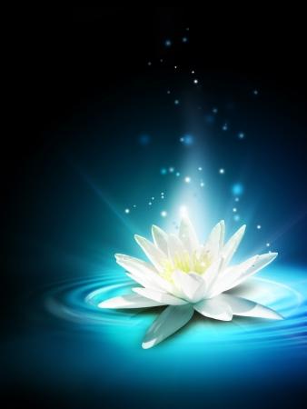 lirio acuatico: Magia flor de lirio en la superficie del agua Foto de archivo