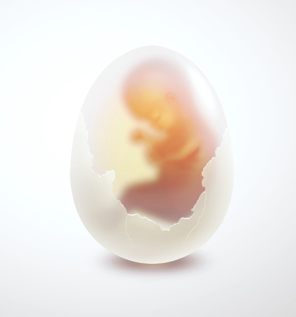 fertility: human embryo in an egg on a light background