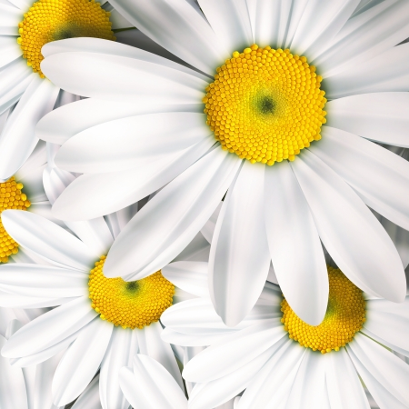 Chamomile close up - summer background Stock Photo - 22497568