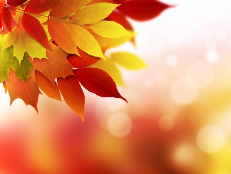 abstract background with bright autumn leaves