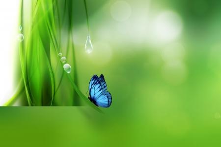 nature abstraite: R�sum� nature de fond avec papillon Banque d'images