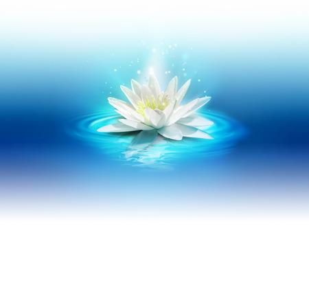 Lily brillante en la superficie del agua Foto de archivo - 31481538