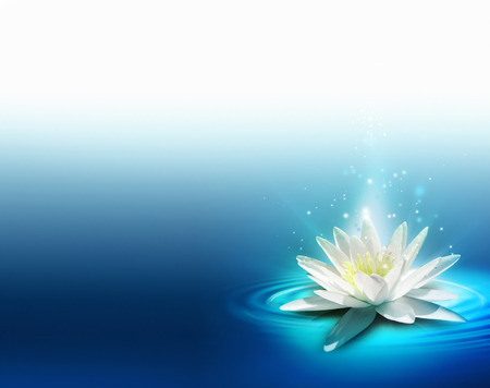 lirio de agua: lirio brillante en la superficie del agua
