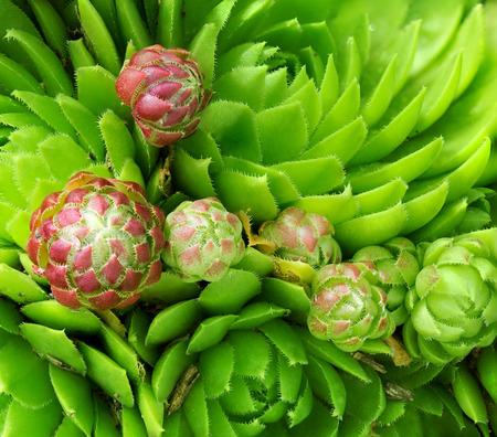 unusual: moss macro - unusual beautiful nature background