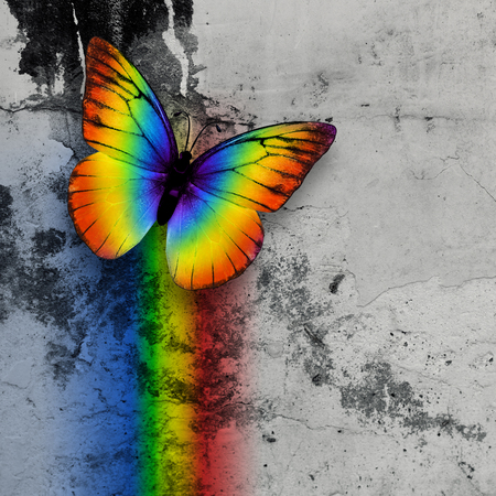 bright rainbow butterfly on monochrome grange wall