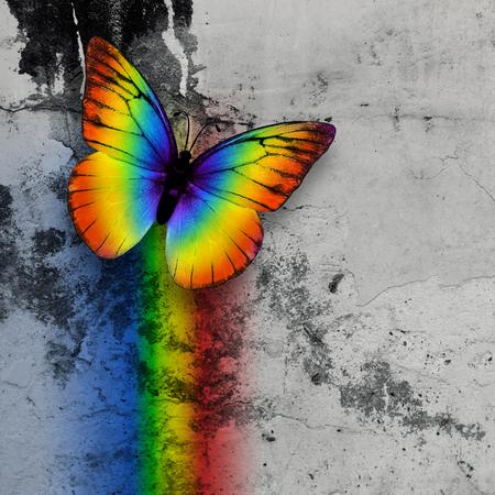 bright rainbow butterfly on monochrome grange wall