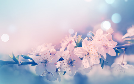 natural backgrounds: Spring card with blooming with soft light effect