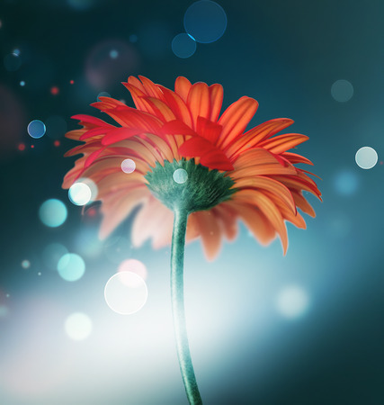 red flower: beautiful red flower on a dark background with bokeh effect