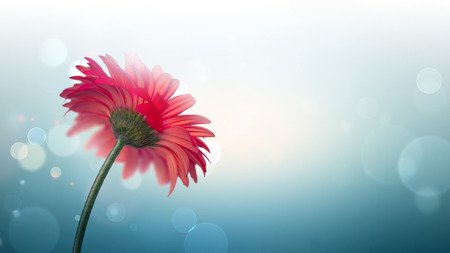 red flower: beautiful red flower on a light background with bokeh effect
