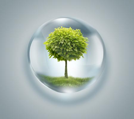 Kropla wody z drzewa wewnątrz - koncepcja środowiska Zdjęcie Seryjne