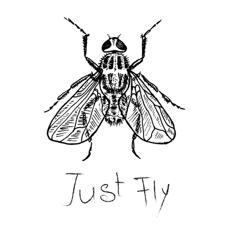 Fly poster. Just fly. Vector, sketch and type for fabric, wrapping, craft, cards, branding, textile