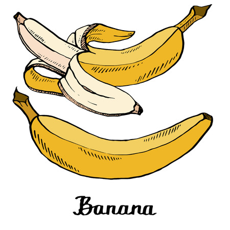 Vector cartoon calligraphy coloured bananas poster for t-shirt, textile, web, icon, card, craft Illustration