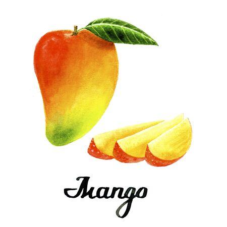 Watercolour mango for poster, cards, branding, decor