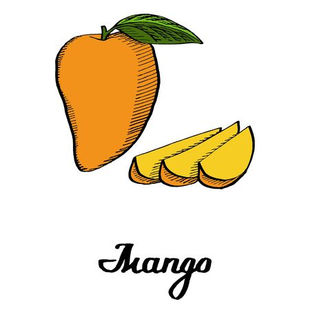 Calligraphy mango with slices on white background for posters, cards, branding, decor, illustration 向量圖像