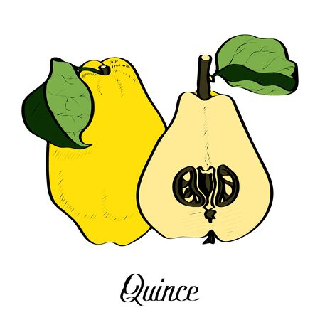 Ink vector original Quince on white with type 向量圖像