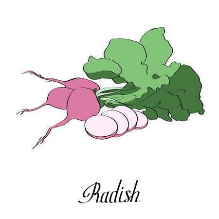 Vector ink radish for card with text