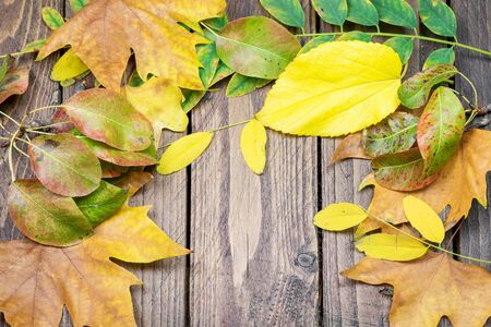 Vignette of dry autumn leaves on the natural wooden background.