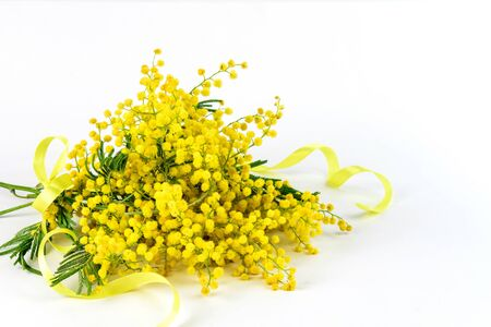Bouquet of fresh golden spring mimosa with a yellow mimosa on the white background isolated closeup. Nice bouquet for Mom's day, Valentine's day and any other holiday.