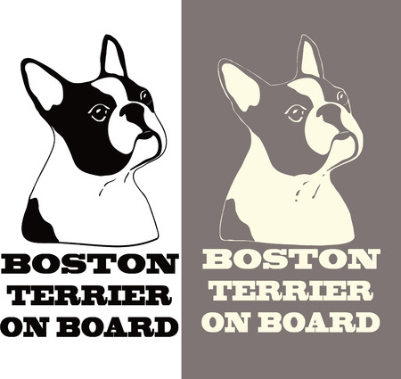 boston terrier: boston terrier for car sticker