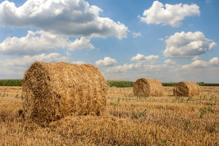 Hay Bales on a countryside with white clouds