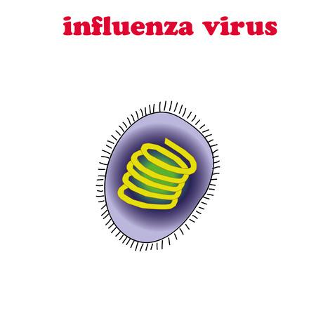 influenza: Influenza virus isolated. Illustration