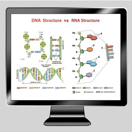 Icon tv show DNA vs RNA structure