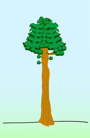 Sequoia tree flat isolated on blue green background vector illustration