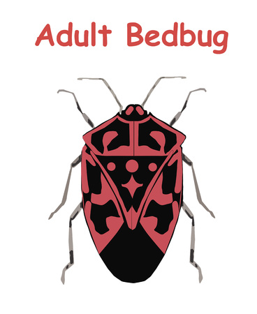 Adult Bed Bug. Poster tato Education vector illustration.  イラスト・ベクター素材