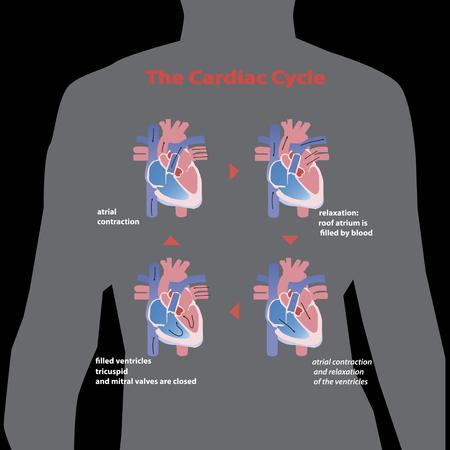 Flat cardiac heart shape isolated on black background. vector illustration. Ilustrace