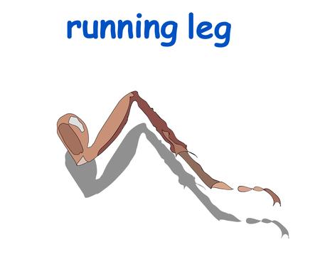running leg isolated on white background.