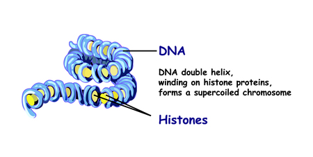 Genome in the structure of DNA. genome sequence. Telo mere is a repeating sequence of double-stranded DNA Illustration