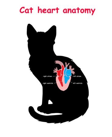 Cat heart anatomy on black dog silhouette with shadow isolated. Part of the mammal heart. Anatomy of pet heart illustration. Education vector illustration Illustration