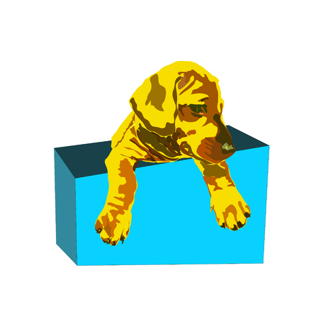Redhead puppy dog sitting in a box. paws off the box. dog puppy in the box isolated on white backgound. Ilustrace