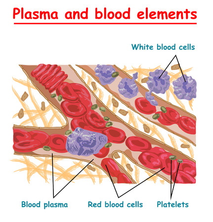 Plasma blood cells, red blood cells, platelets. Plasma isolated vector info graphic. Different elements of human blood.