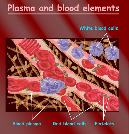 Plasma blood cells, red blood cells, platelets. Plasma isolated on red. Different elements of humans blood plasma Ilustrace