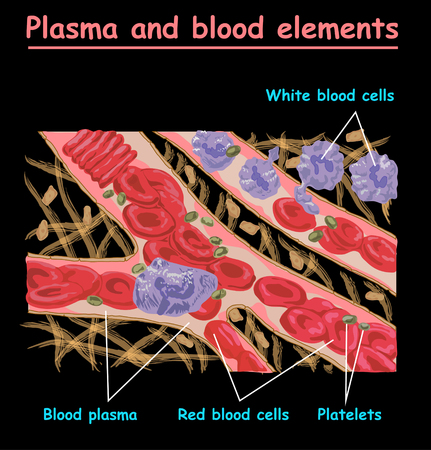 Plasma blood cells, red blood cells, platelets. Plasma isolated on black. Different elements of humans blood plasma