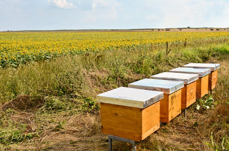 Hives and sunflower field in Europe