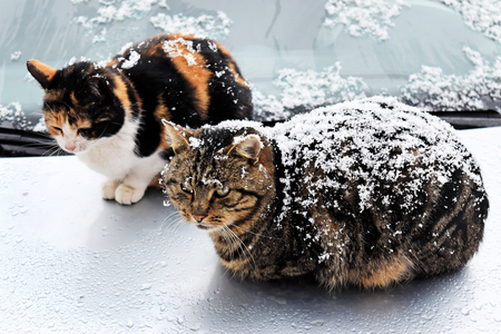 Neglected cats in snow