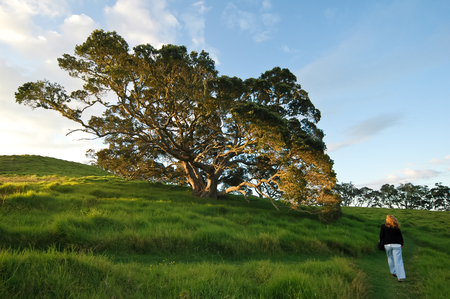 soltería: Lonely woman walking uphill in dusk time. New Zealand scenery