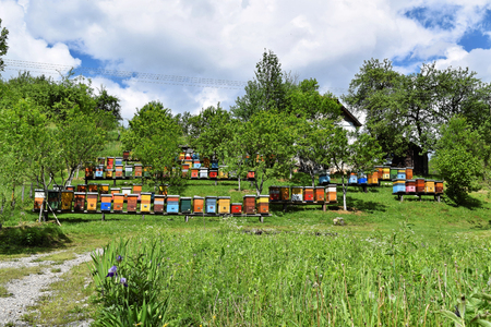 Colorful beehives in a countryside yard
