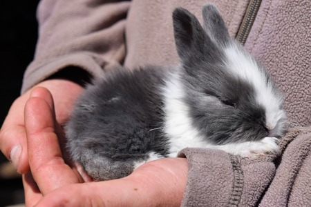 Little cute bunny in a farmers hands Stock Photo