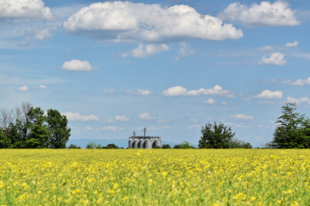 Silo surrounded by oilseed rape flowers in blossom during springtime